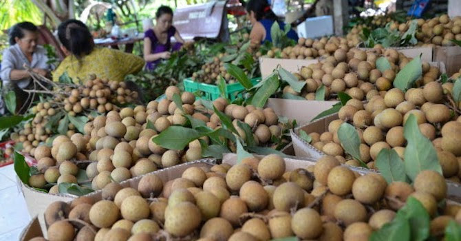 """Trung Quốc """"siết"""" kiểm dịch, xuất khẩu rau quả giảm sâu nhan o6yxu hydn"""