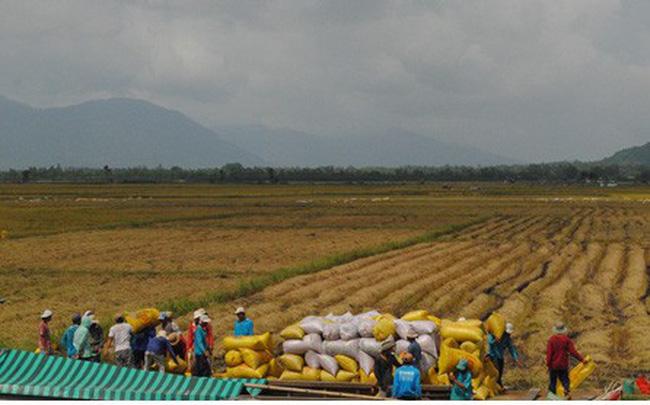 """Ngành lúa gạo phải thoát khỏi """"tư duy mùa vụ và thương vụ"""" photo1554425213852 1554425214371 crop 15544252347532035021005"""