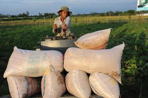Nghẽn đường xuất khẩu gạo sang Trung Quốc 10 chot 15581007467061178517989