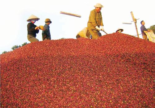 Tăng cường xuất khẩu cà phê chế biến sang Tây Ban Nha 203282019 nghich ly ca phe 90 xuat tho chi beo nuoc ngoai huong loi