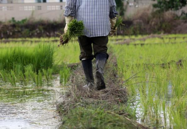 Triển vọng xuất khẩu gạo Thái Lan khởi sắc trong bối cảnh kinh tế toàn cầu suy thoái c11678580190516062255620x413 155851231998492307447