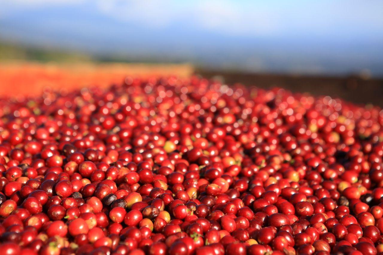 Đà giảm xuất khẩu cà phê Việt Nam vẫn chưa dứt ca phe 5 15561808644266372034