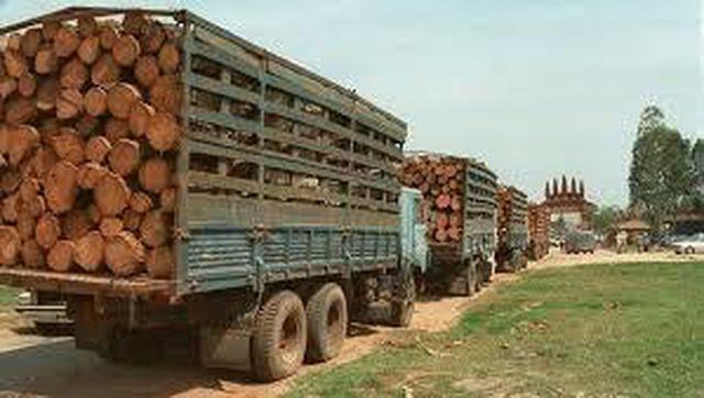 Việt Nam chi tỷ USD nhập lượng lớn gỗ, cao su và hạt điều từ Lào và Campuchia nhap khau go 1555896463596