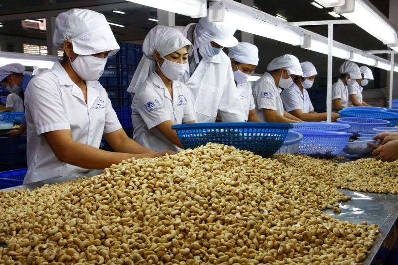 Từ tháng 5, hạt điều nhập khẩu từ châu Phi hết khó kiểm dịch photo 1 1555769601493238930490