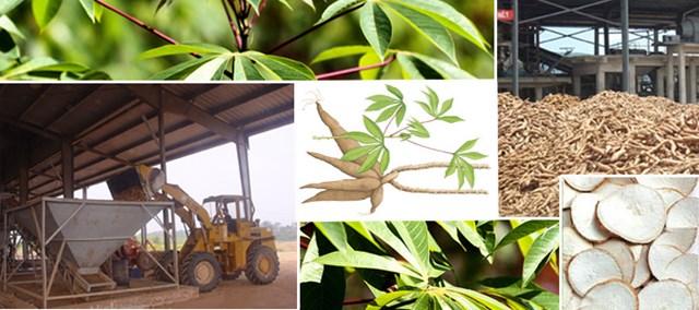 Xuất khẩu sắn và sản phẩm sắn: Lượng, kim ngạch giảm, giá tăng sancuxk NRRD