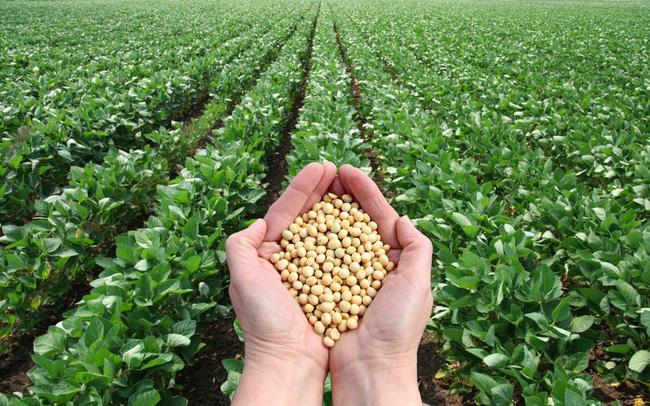 Cuộc chiến thương mại Mỹ – Trung ảnh hưởng ra sao tới ngành nông nghiệp Việt Nam và toàn cầu? soybean 5 15574534225251628602631 crop 1557453426983693740781