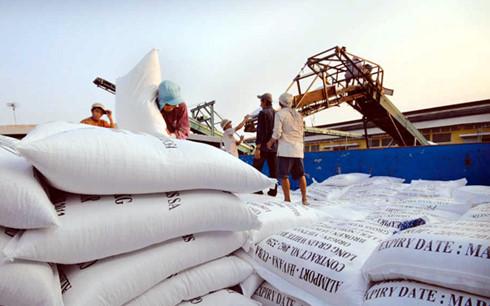 20 doanh nghiệp nhập khẩu gạo của Trung Quốc đến Việt Nam giao thương xkgao 1