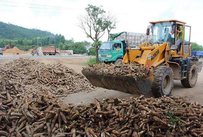 Xuất khẩu sắn lao đao vì Trung Quốc siết chặt nhập khẩu 08 ulrp