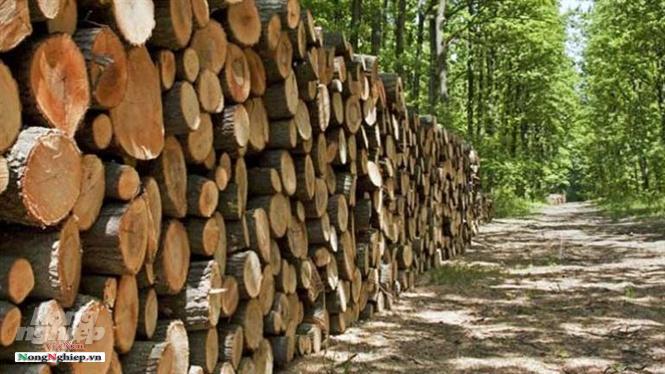 Bài toán gỗ nguyên liệu cho mục tiêu 20 tỷ USD WaterMark 04062019204754443