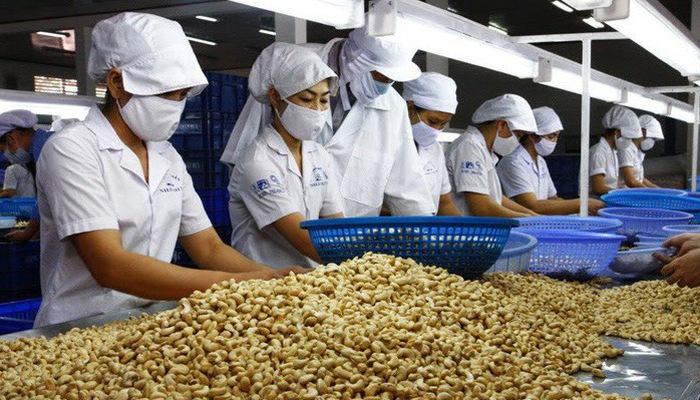 Đột biến: Trung Quốc tăng mua hạt điều, mở nhà máy dọc biên giới VN dot bien Trung Quoc tang mua hat dieu mo nha may doc bien gioi VN hatdieu 1558360228 width700height400