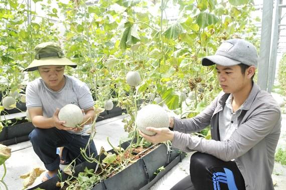 Xuất khẩu nông sản có dấu hiệu chựng lại sggpdualuoi wljt