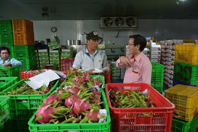 Xuất khẩu nông sản nhìn từ những tháng đầu năm: Nâng chất để vươn xa xk