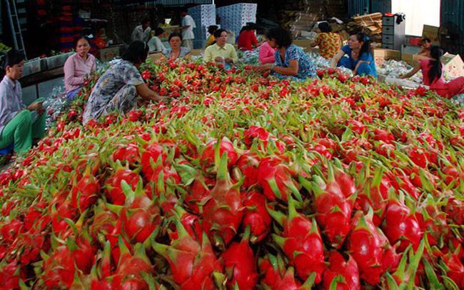 """Đằng sau chính sách """"siết chặt"""" nhập khẩu từ Việt Nam của Trung Quốc là gì? xuat khau trai cay viet doanhnhansaigon 1512743403 15610893641881774930235 crop 15610893702002040338627"""
