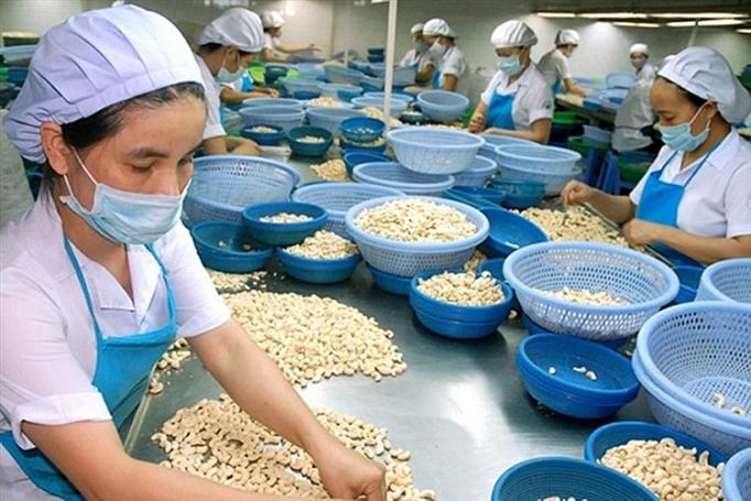6 tháng đầu năm 2019, xuất khẩu hạt điều giảm 12,1% giá trị 1339 xk YiYu