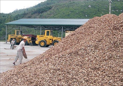 """Xuất khẩu dăm gỗ: Số 1 thế giới vẫn không """"quyết"""" nổi thị trường Xuat khau dam go So 1 the gioi van khong quyet noi thi truong x11 1563002166 12 width500height350"""