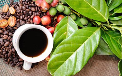Xuất khẩu cà phê giảm mạnh caphe 1561944999 3525 1561945291