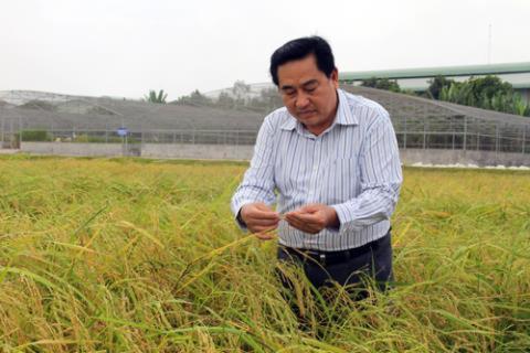 Xuất khẩu gạo vào Trung Quốc giảm 75%, doanh nghiệp lao đao xuat khau gao vao trung quoc giam 75 doanh nghiep lao dao 910235