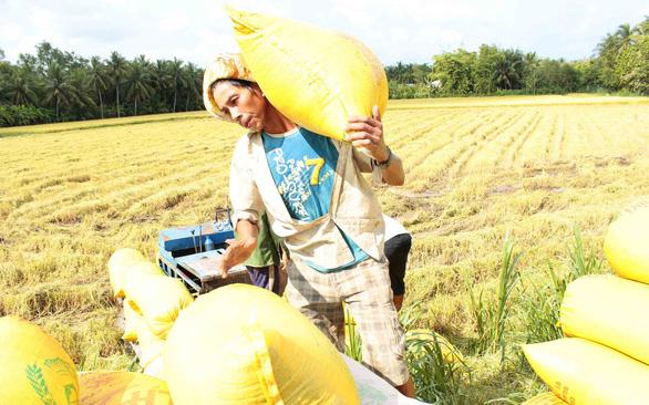 Chính sách trợ giá lúa gạo của Thái có ảnh hưởng đến Việt Nam? lua gaochiquoc 2 6read only 1568907878565466291451