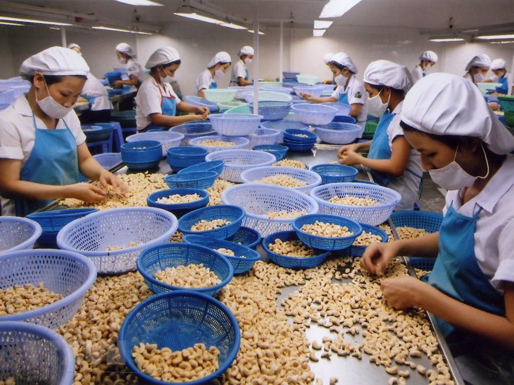 Covid-19 thổi bay 1 tỷ USD xuất khẩu của ngành điều covid 19 thoi bay 1 ty usd xuat khau cua nganh dieu1587319695