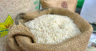 Gạo Việt rộng đường thâm nhập vào EU nhờ EVFTA, điểm sáng trong bức tranh xuất khẩu 2020 a92b05aef9aa06f45fbb 1598952474642331674137 310x165