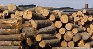 Quy định mới về thủ tục xuất, nhập khẩu gỗ từ 30/10/2020 thu tuc xuat nhap khau go 2709150457 310x165