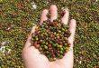 Xuất nhập khẩu ngày 14-16/11: 'Giải cứu' thành công 3 triệu USD hồ tiêu mắc kẹt tại Nepal, thương mại Việt Nam-Trung Quốc cán mốc 100 tỷ USD 3545 6 110x75