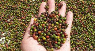 Xuất nhập khẩu ngày 14-16/11: 'Giải cứu' thành công 3 triệu USD hồ tiêu mắc kẹt tại Nepal, thương mại Việt Nam-Trung Quốc cán mốc 100 tỷ USD 3545 6 310x165