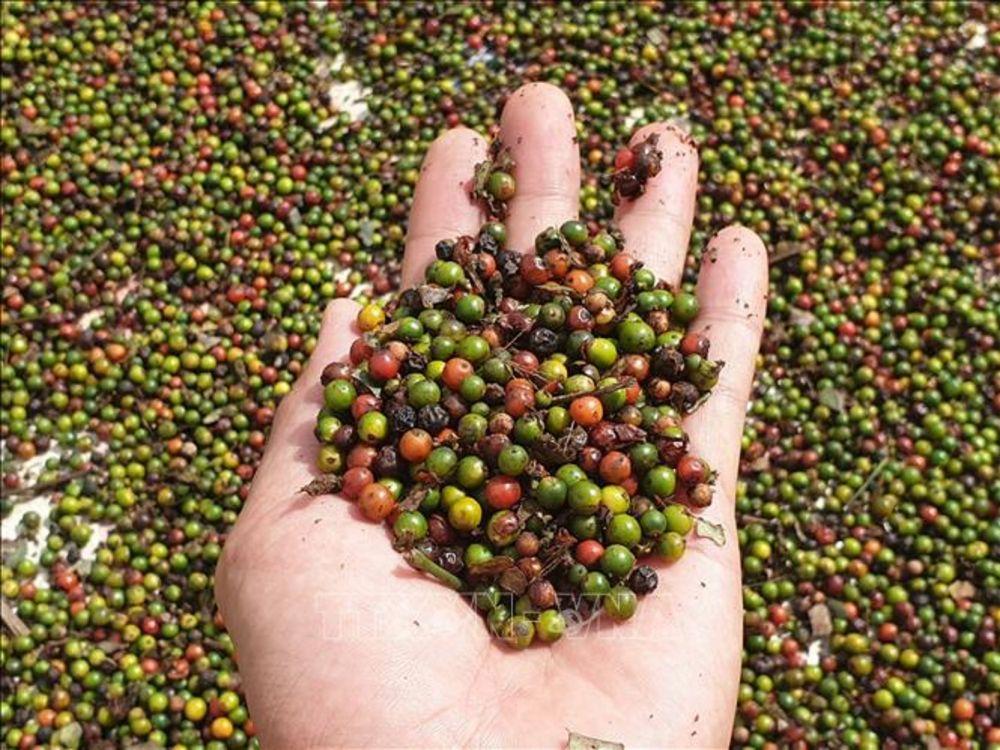 Xuất nhập khẩu ngày 14-16/11: 'Giải cứu' thành công 3 triệu USD hồ tiêu mắc kẹt tại Nepal, thương mại Việt Nam-Trung Quốc cán mốc 100 tỷ USD 3545 6