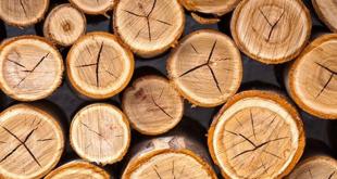 """Sức bật """"tỷ đô"""" của ngành công nghiệp gỗ cn go 1606802257904916919747 crop 1606802267452943767869 310x165"""