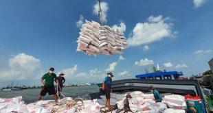 Giá gạo Việt xuất khẩu cao nhất trong 9 năm xuat khau 5 1read only 16064421567082141348863 310x165