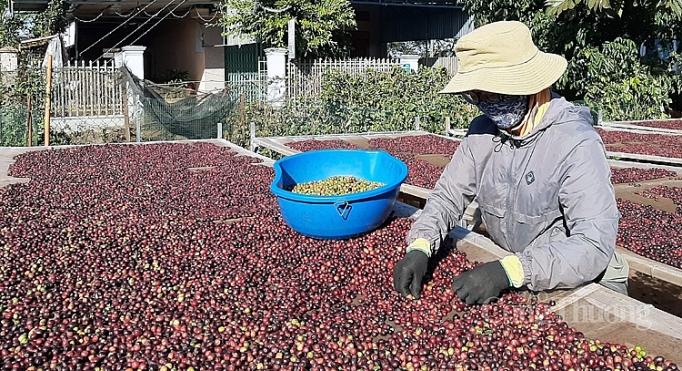 Xuất khẩu cà phê vào EU: Chú trọng khai thác thị trường ngách 3729 20
