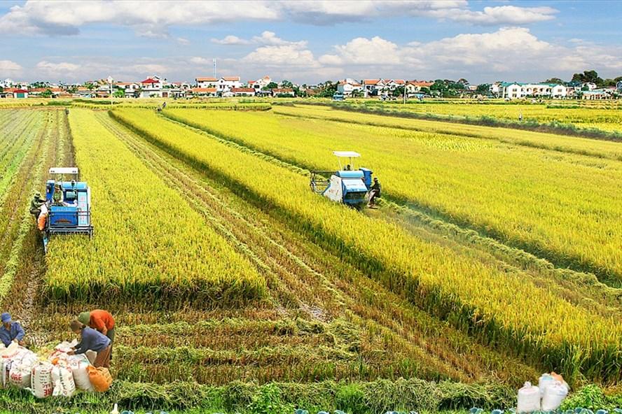 Philippines giảm thuế nhập khẩu gạo: Cơ hội cho gạo Việt gia tăng xuất khẩu KHCN1