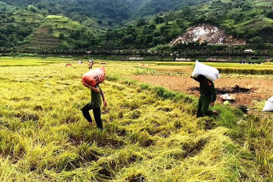 Xuất khẩu gạo Việt Nam đang gặp nhiều lợi thế, nhưng vẫn tiềm ẩn bất lợi Thu Hoach Xuat Khau