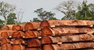 Loại bỏ ngay rủi ro từ gỗ nhiệt đới nhập khẩu go chau phi 1003 20210506 67 160444 310x165