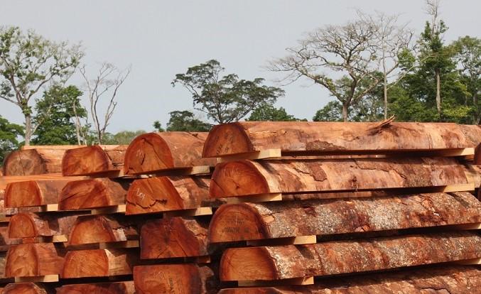 Loại bỏ ngay rủi ro từ gỗ nhiệt đới nhập khẩu go chau phi 1003 20210506 67 160444