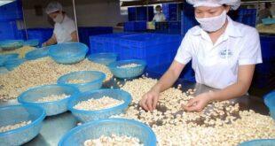 Diễn biến bất thường từ Campuchia, thế mạnh Việt Nam tụt đáy hat dieu 310x165