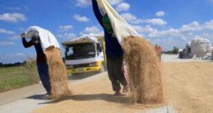 Nguy cơ xuất khẩu gạo sụt giảm do Philippines dự định chuyển sang mua gạo Ấn Độ giá rẻ photo1623051665087 1623051665170152917372 310x165