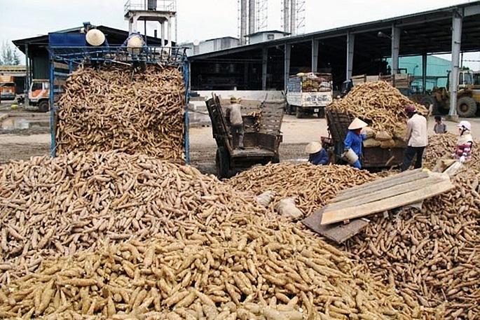 Trung Quốc đột ngột giảm mua, 500.000 tấn sắn tồn kho san 162198853444958344833