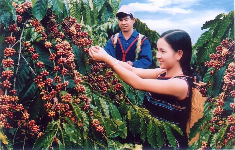 """Cà phê xuất khẩu của Việt Nam đang chịu """"thiệt thòi"""" về giá bán 73813e12 74bb 47b1 94cf 209ef0cc6acf"""