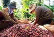 Giá cà phê xuất khẩu tăng tại nhiều thị trường FireShot Capture 162 Gi   c   ph   xu   t kh   u t  ng t   i nhi   u th    tr     ng vinanet