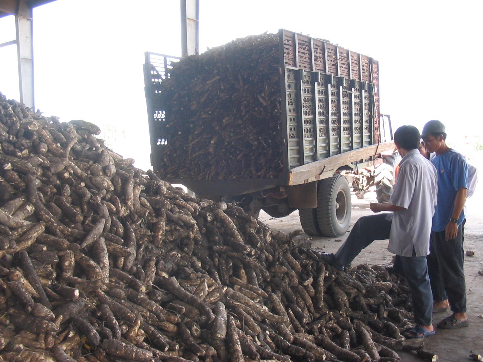 Đang nhập cả triệu tấn trộn vào thức ăn chăn nuôi, tại sao Trung Quốc đột ngột giảm mua nông sản này của Việt Nam? san 1628139508308573996048