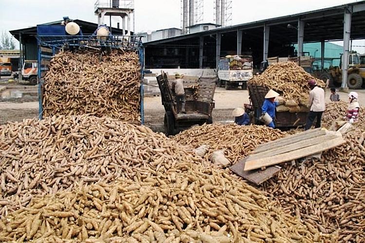 Nửa đầu năm 2021, xuất khẩu sắn và sản phẩm sắn thu về 611,69 triệu USD 4247 xuat khau san