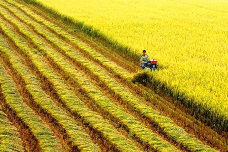 """Mở """"cửa sáng"""" cho xuất khẩu gạo cuối năm, dù dịch COVID-19 còn căng thẳng Xuat Khau Gao 6"""