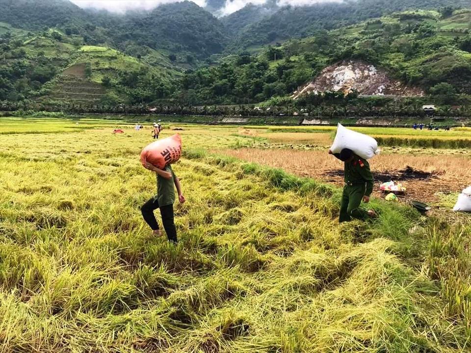 """Mở """"cửa sáng"""" cho xuất khẩu gạo cuối năm, dù dịch COVID-19 còn căng thẳng Xuat Khau Gao Gat Lu"""