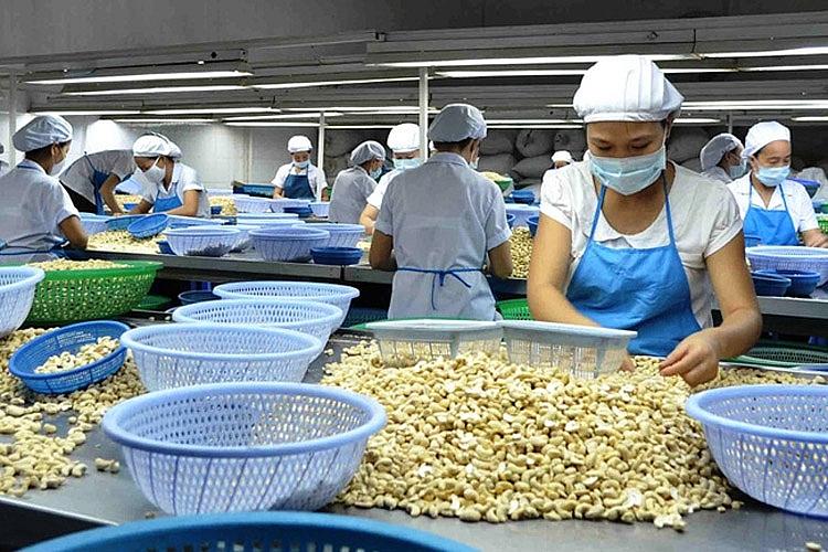 Cạnh tranh gay gắt, thị phần hạt điều Việt Nam tại Hoa Kỳ vẫn chiếm 89,26% 0116 hat dieu 1631757862