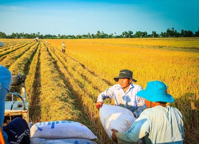 Giá gạo xuất khẩu Việt tăng trở lại nhờ nhu cầu phục hồi 2 114745 132