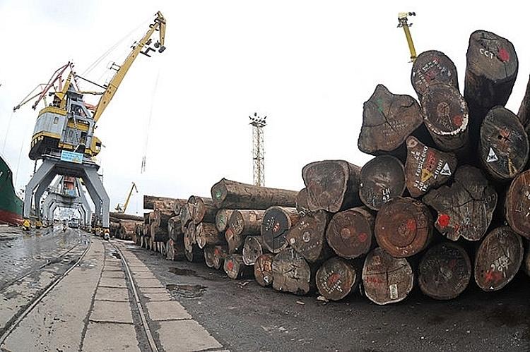 Chủ động nguồn nguyên liệu gỗ, đáp ứng đơn hàng xuất khẩu cuối năm 2240 go chau phi nhap khau